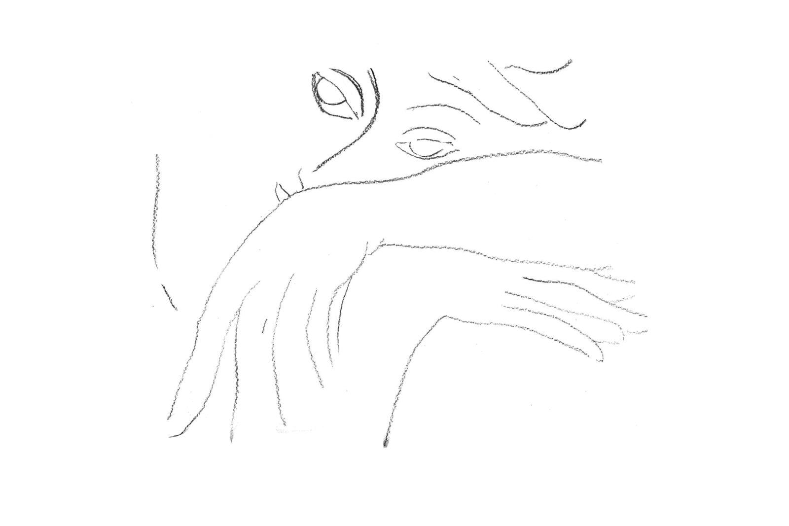 (EN) Dibujo Rostro