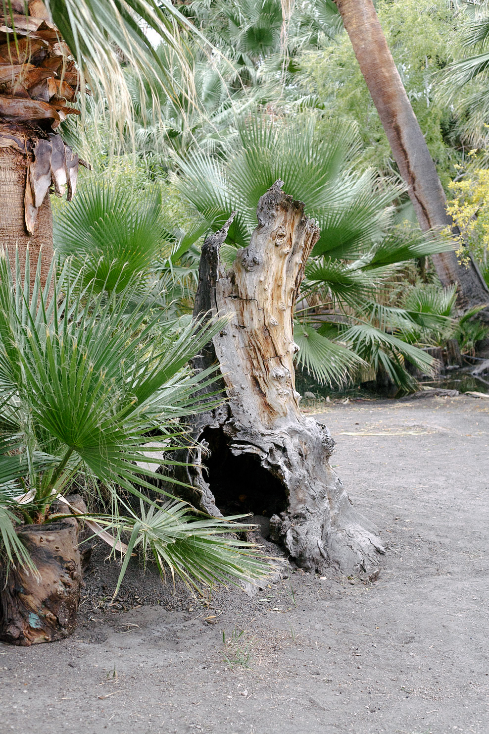 Freunde-von-Freunden-Joshua-Tree-park-desert-trip-claire-cotrell-laurence-spencer-king-013b3