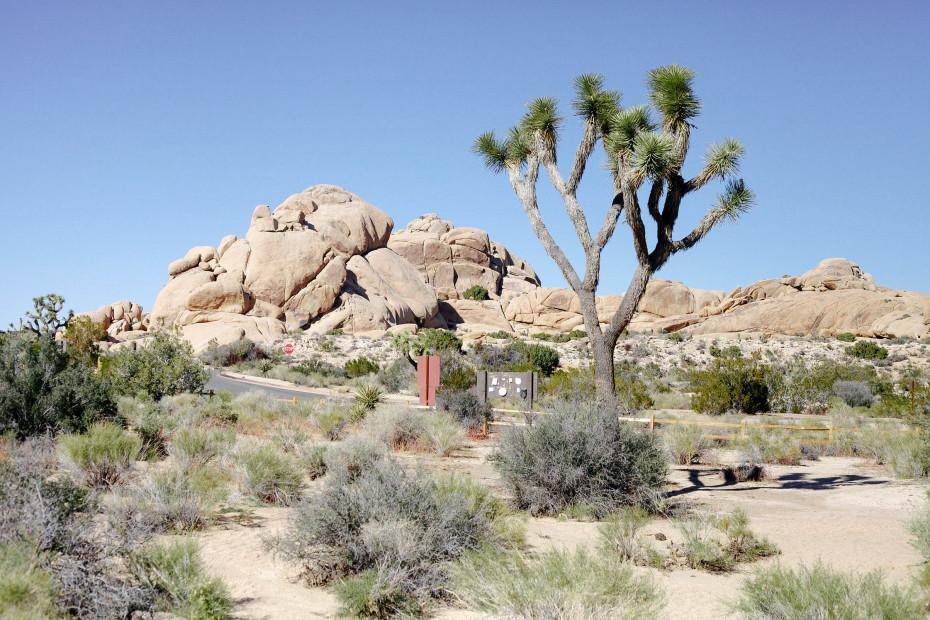 Freunde-von-Freunden-Joshua-Tree-park-desert-trip-claire-cotrell-laurence-spencer-king-045