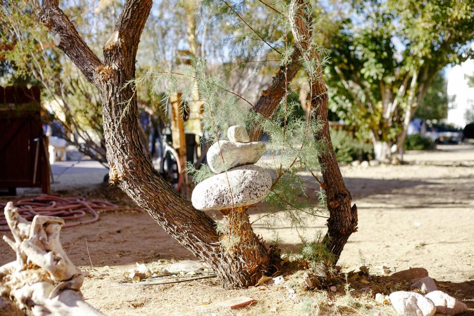 Freunde-von-Freunden-Joshua-Tree-park-desert-trip-claire-cotrell-laurence-spencer-king-057
