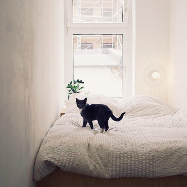 Katie Paterson's cat