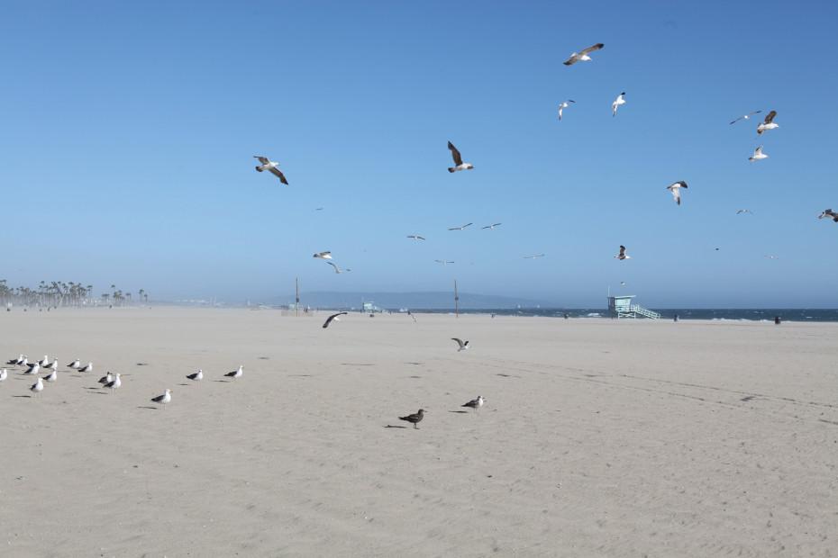 Freunde_von_Freunden_Venice_Beach_Claire_Cottrell_IMG_2862