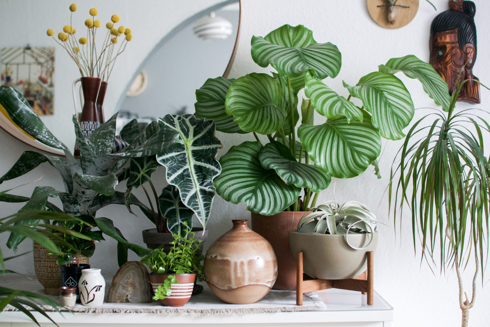 Trend Urban Jungle : Igor and judith of urban jungle bloggers explain why plants became