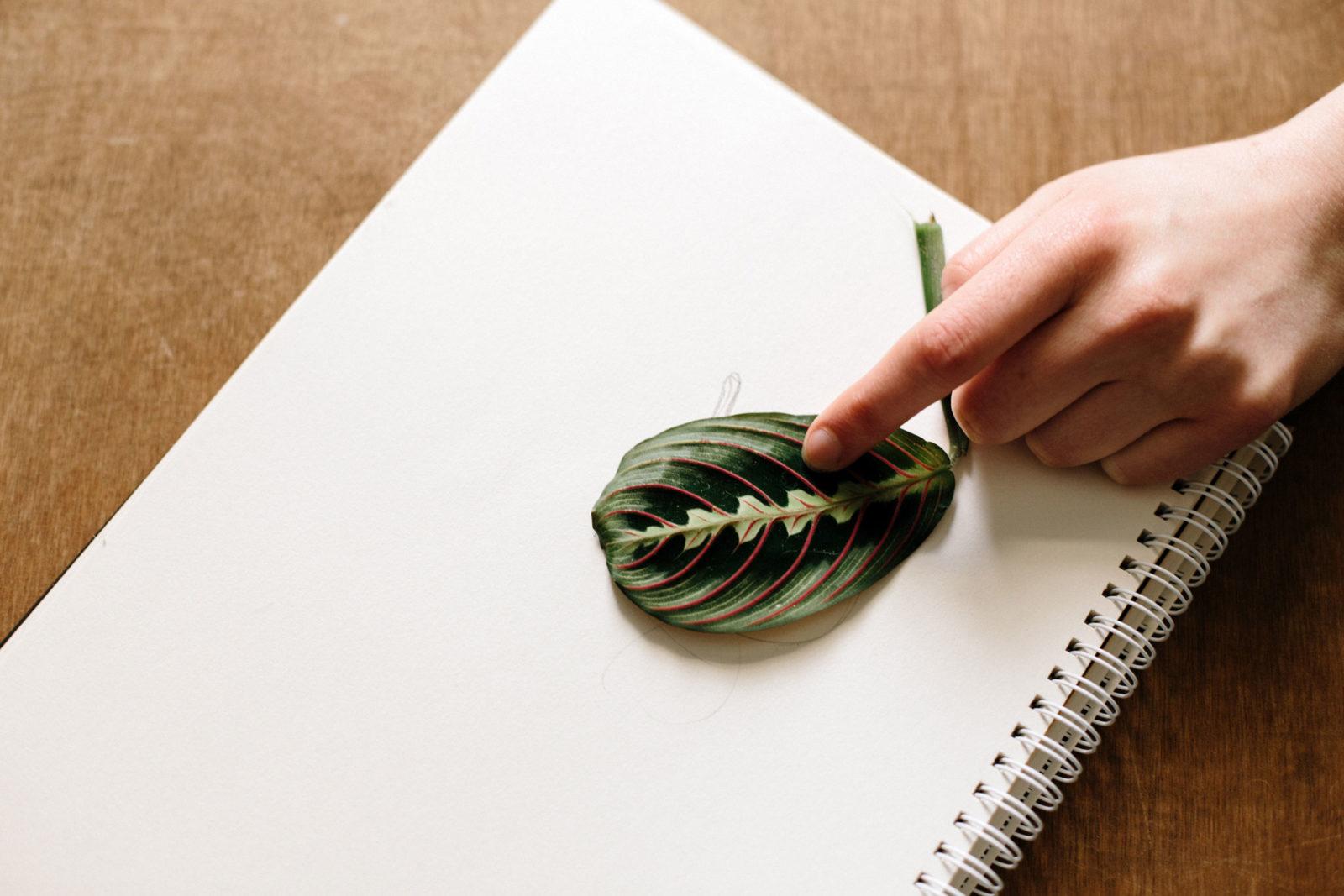 Wissen durch Sehen: Die Zeichnungen von Katie Scott verschmelzen ...