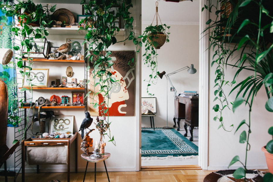 Hanging plant in flat