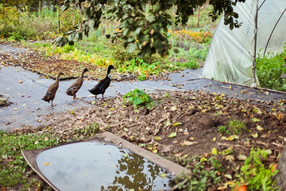 Freunde von Freunden — (English) Rolf Henke — Organic Farmer, Home and Farm, Gut Temmen, Schorfheide —