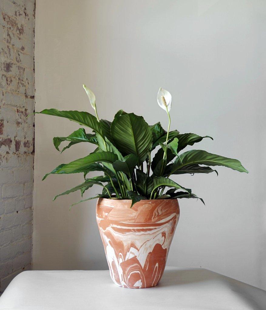 Tree Planter: Marbled Terracotta