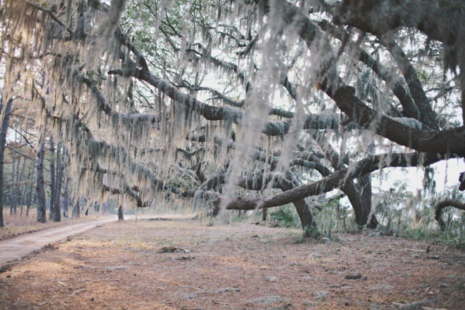 Freunde-von-Freunden-Journal-Charleston-botanybay